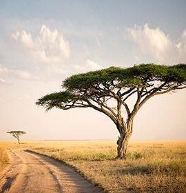 destination Tanzanie
