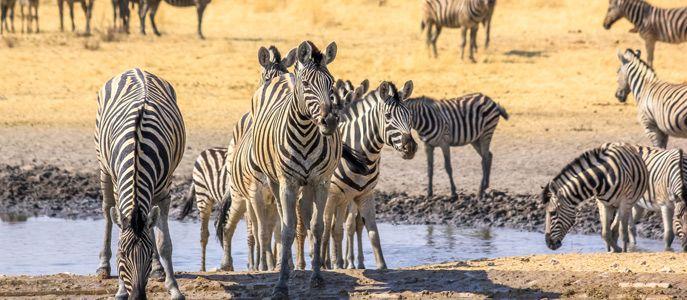 Etosha national park-windhoek